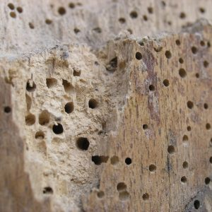 Woodworm Holes in Timber